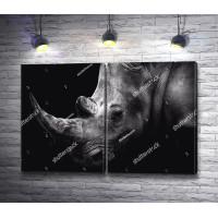 Голова носорога
