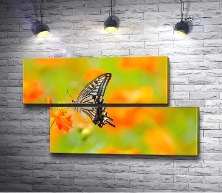 Бабочка на цветке, макросъемка