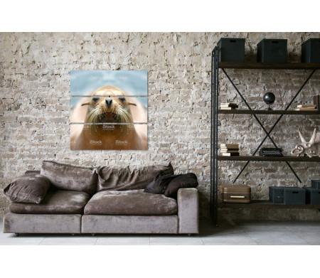 Усатая морда тюленя