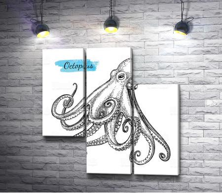 Рисунок осьминога