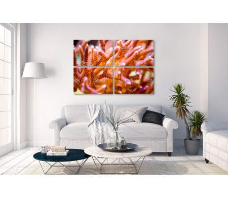 Оранжевые кораллы