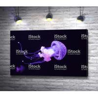 Фиолетовая медуза