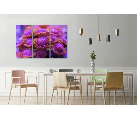Необычные кораллы
