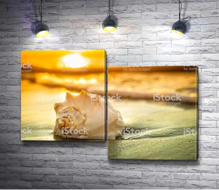 Ракушка на мокром песке во время заката