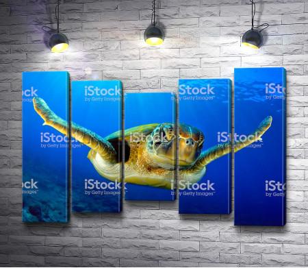 Черепаха в открытом океане