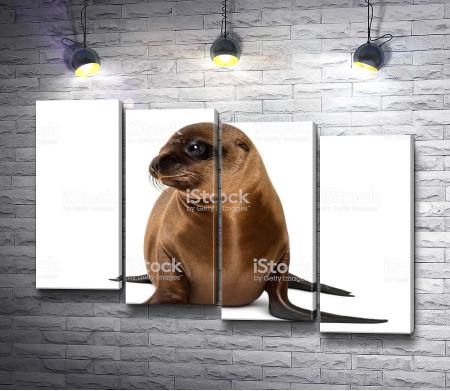 Тюлень на белом фоне