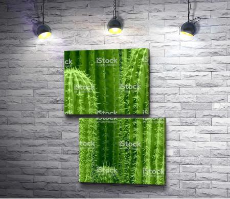 Ярко-зеленые кактусы