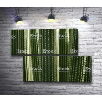 Текстура кактусов