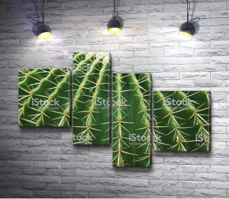 Поверхность кактуса, макросъемка