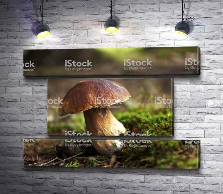 Одинокий гриб