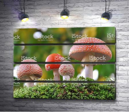 Ядовитые грибы в лесу