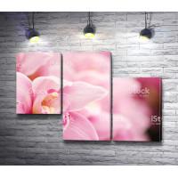 Сердце розовой орхидеи