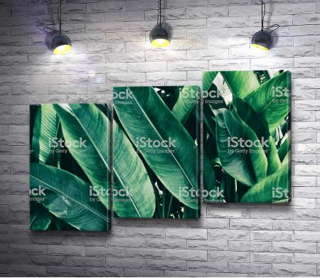 Тропические зеленые листья