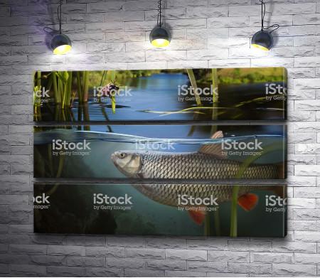 Рыба плавает в водоеме