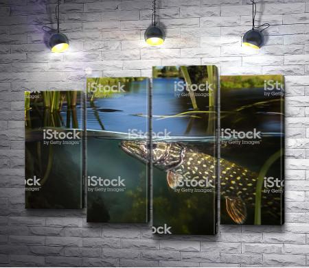 Рыба под гладью озера