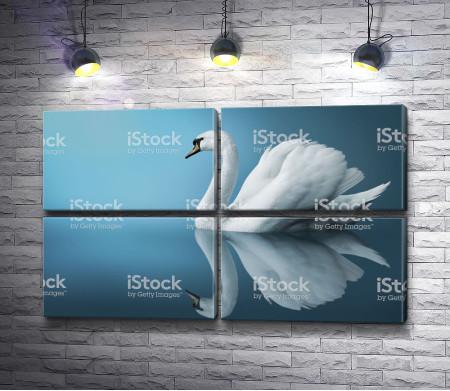 Лебедь невероятной красоты