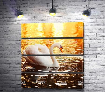 Лебедь в лучах заката