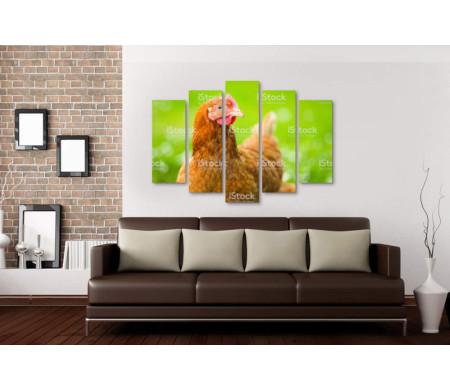 Курица на травяной лужайке