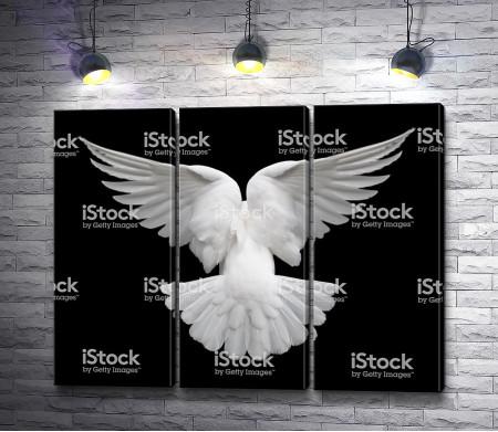 Белый голубь на черном фоне