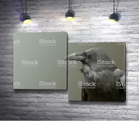 Ворон в черно-белом фоне