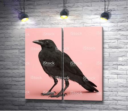 Черный ворон на розовом фоне