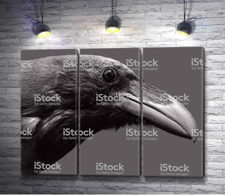 Голова черного ворона