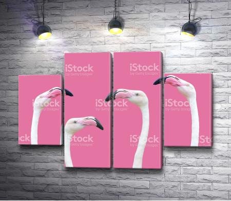 Головы фламинго на розовом фоне