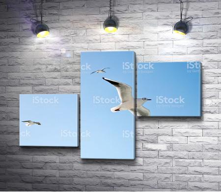 Чайки высоко в небе