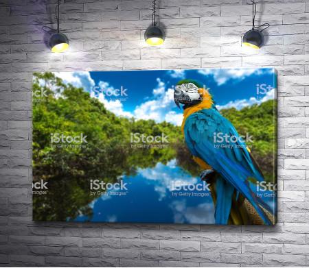 Попугай ара на фоне озера