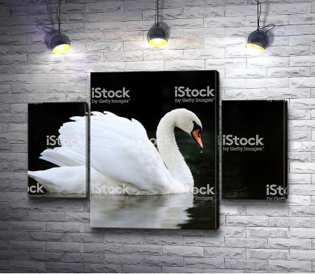 Лебедь над гладью воды