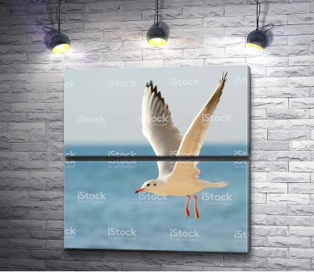 Чайка летит над морем