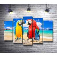 Два попугая ара на пляже