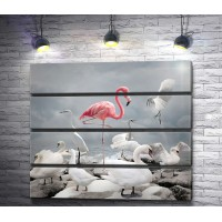 Розовый фламинго среди лебедей