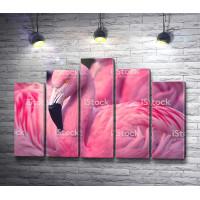 Невероятной красоты фламинго
