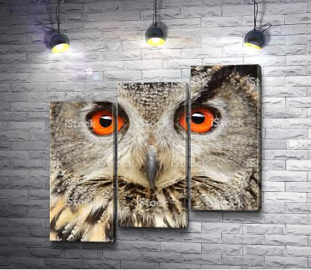 Зоркий взгляд совы