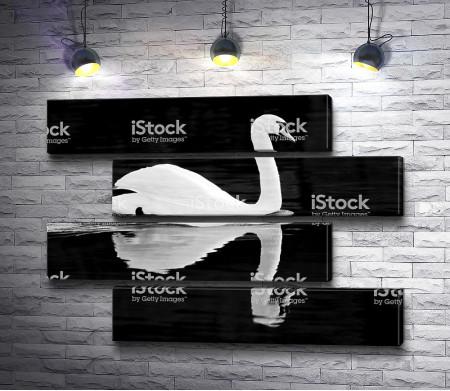 Лебедь в черно-белой гамме