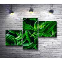 Поляна зеленых листьев