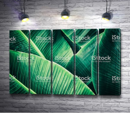 Зеленая текстура тропических листьев