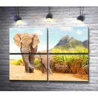 Слоны, гуляющие по Сафари