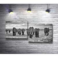 Группа слонов шагает по пустыне
