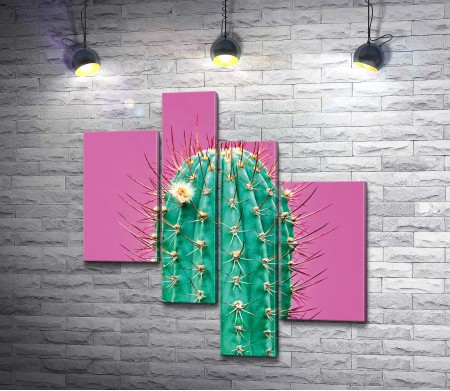 Яркий кактус на розовом фоне