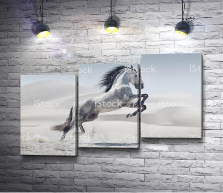Одинокая лошадь в пустыне