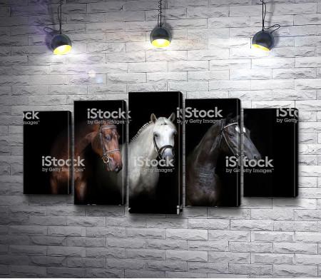 Три лошади в уздечках