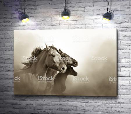 Лошади в туманной дымке