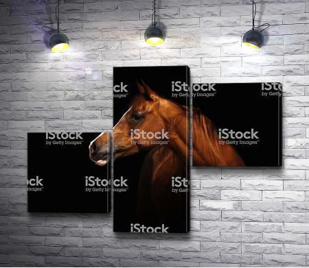 Коричневый конь на черном фоне