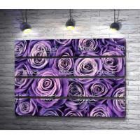 Много фиолетовых роз