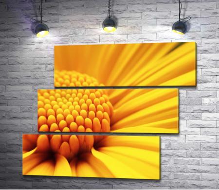 Желтая гербера, макросъемка