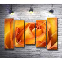 Лоно оранжевой розы