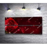 Романтическая роза красного цвета