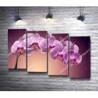 Веточка фиолетовой орхидеи